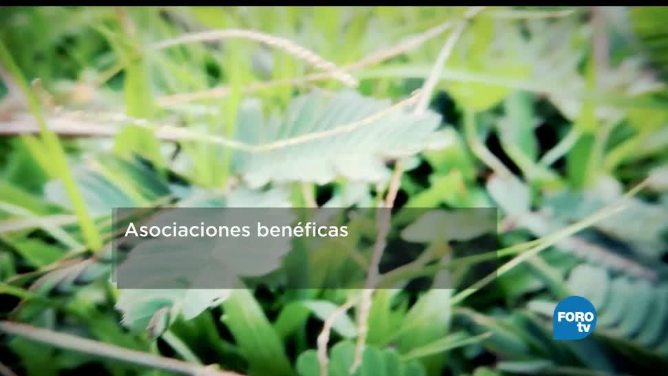 Biólogos, asociaciones, benéficas, Investigadores