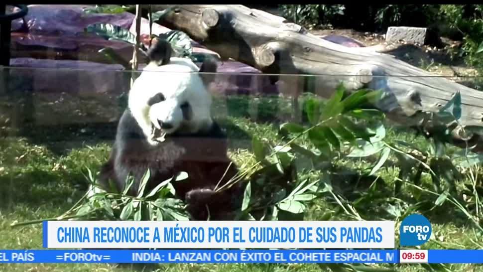 China, reconocimiento, Ciudad de México, cuidado de pandas, pandas