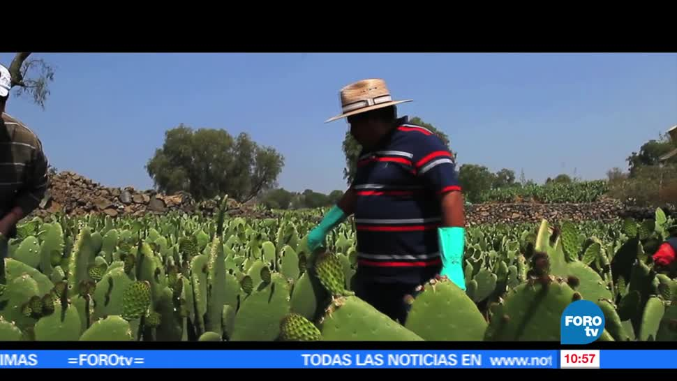 trabajador, Joel Cruz López, sembrar, Milpa Alta