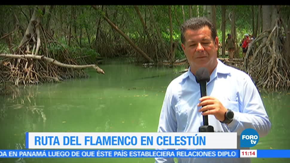 Eduardo Saint Martin, reportaje, ruta del flamenco, Celestún