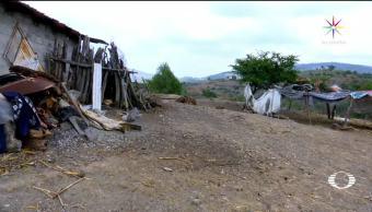 Animal, extraño, amenaza, comunidad Hidalgo, puma, mata ganado