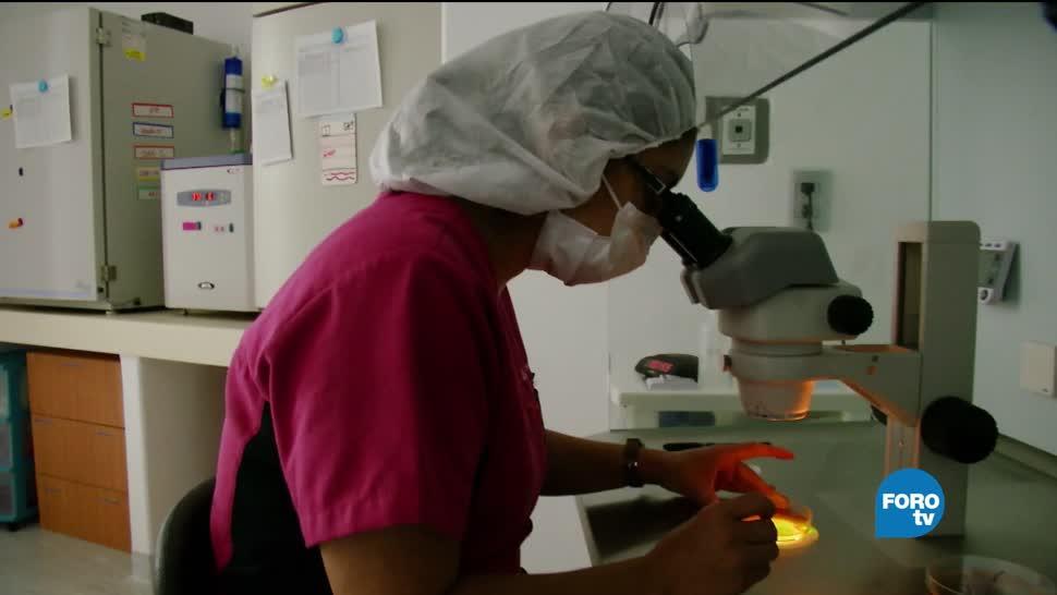 Técnicas, evitar, embarazos, múltiples, escoger, mejor embrión