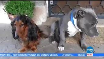 perros traviesos, regañados, dueño, culpa delata