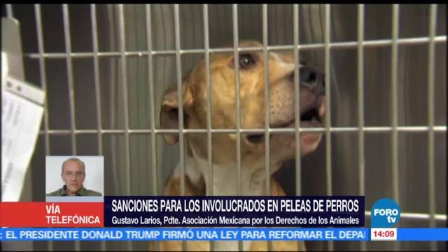noticias, forotv, poco efectivas, sanciones, organizadores, peleas de perros