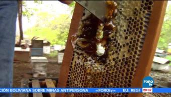 Cambio climático, afecta, producción de miel, Colima