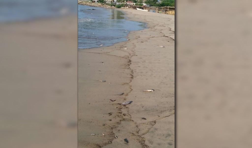 Peces muertos aparecen en playas de salina cruz