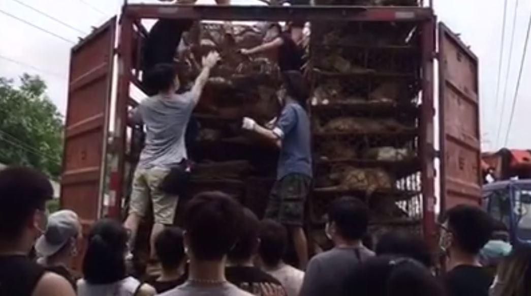 Rescata a perros que serían sacrificados en China