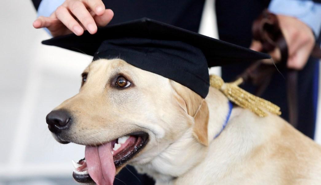 diploma correo, mascotas diplomas, fábrica diplomas, animales