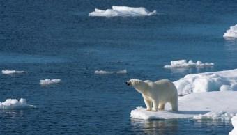 Osos polares, energía, calentamiento global, Alaska, medio ambiente, ecología,