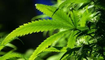mariguana, marihuana, mariguana medicinal, marihuana mexico