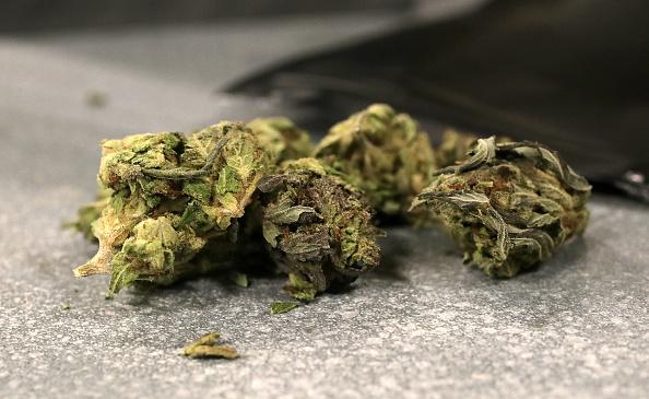 Hojas de marihuana para ser procesadas