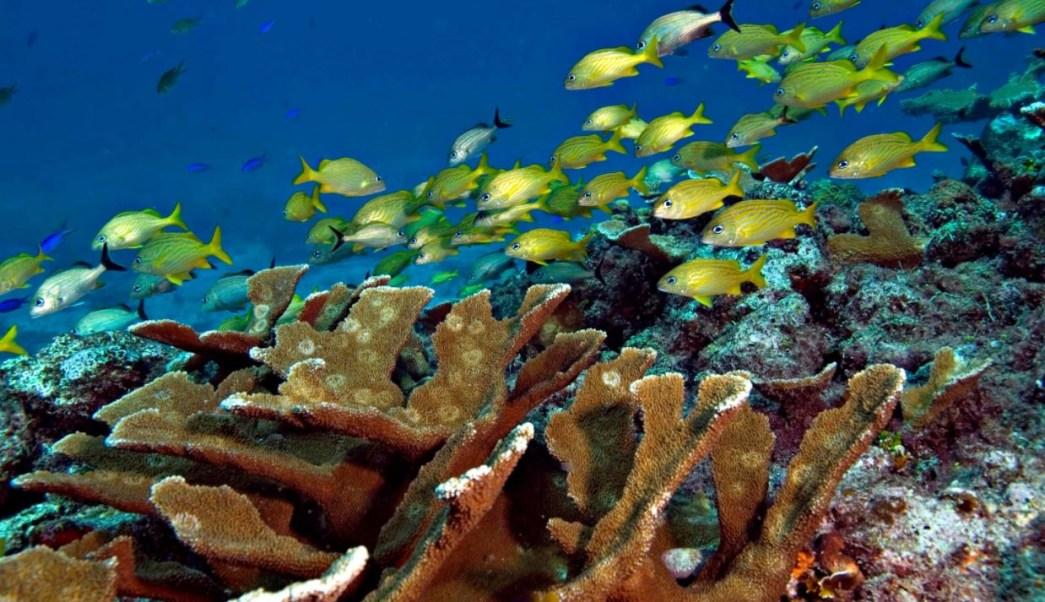 M xico celebra d a mundial de oc anos con especies en for Especies de peces