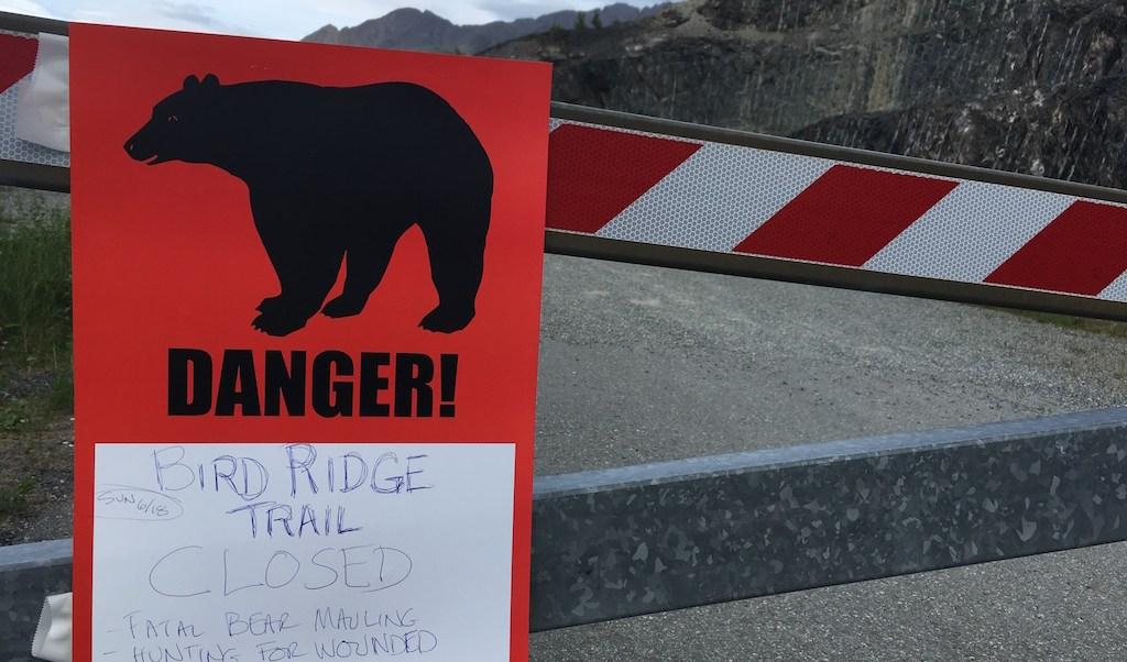 oso negro, ataque oso, Patrick Cooper, Alaska