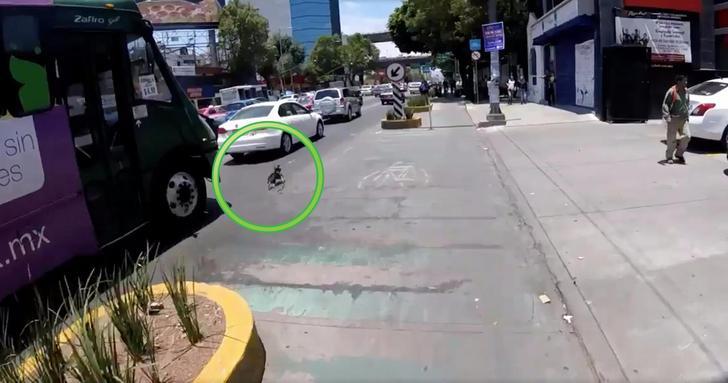 Ciclista salva a perrito de ser atropellado en Av. Revolución en CDMX