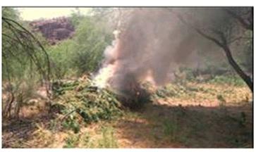 Incineración de plantíos de marihuana. (Noticieros Televisa, Archivo)