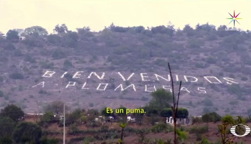 Plomosas, Hidalgo, perro feral, puma, perro, animales, seguridad