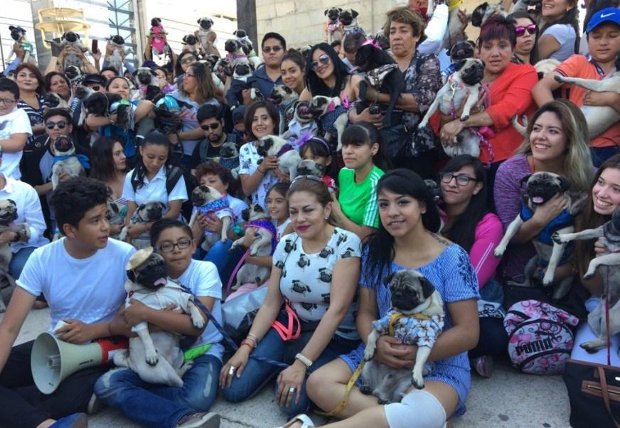 Segunda edición de reunión de pugs en el Monumento a la Revolución (@rcontreras_spr)