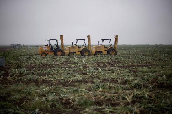 Sectores productivos estadounidenses reconocen beneficios de mercado mexicano