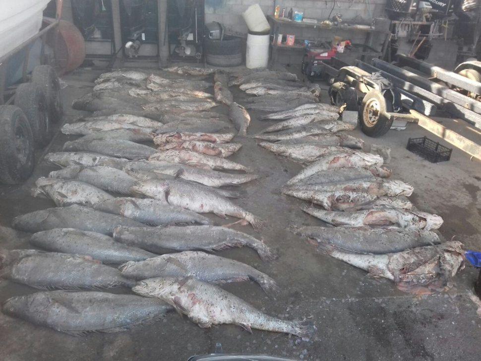 Enrique Peña Nieto, vaquita marina, totoaba, China