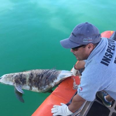 Por qué como mexicanos nos debe importar el rescate de la vaquita marina y la totoaba