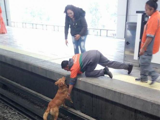 Redes Sociales, muerte, perro, metro, Pantitlán, Facebook