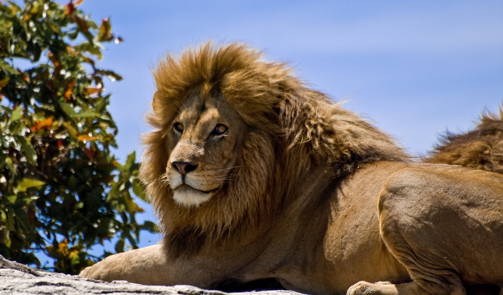 Cecil, León, Xanda, Caza, Muere, Matan, Cecil el león