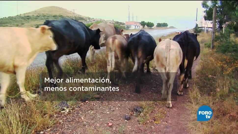 Mejor, alimentación, contaminantes, agropecuarias