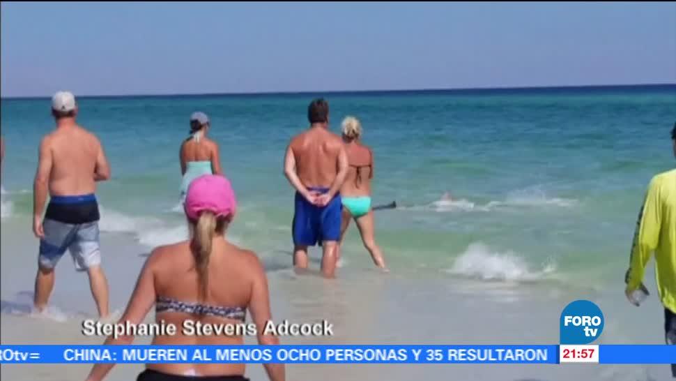avistados, siete tiburones, playas, Florida, playa, turistas