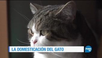noticias, forotv, La historia, domesticación, gatos, domesticación de los gatos