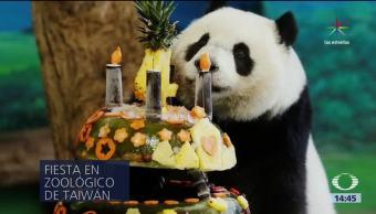 noticias, televisa, La panda, Yuan Shuai, cumple, cuatro años
