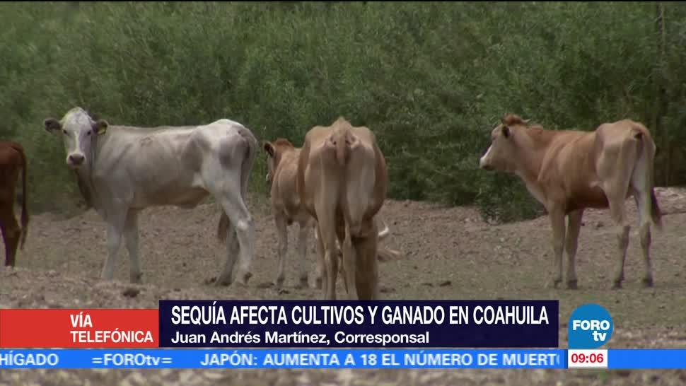 sequía, cultivos en Coahuila, escasez de agua, consumo humano