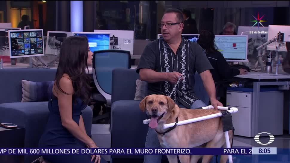 noticias, televisa, Rescatan, El Güero, perro abandonado, baleado en la CDMX
