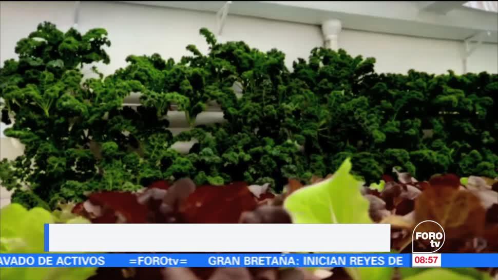 cultivo hidropónico, lechugas, Ximena Cervantes, reportaje