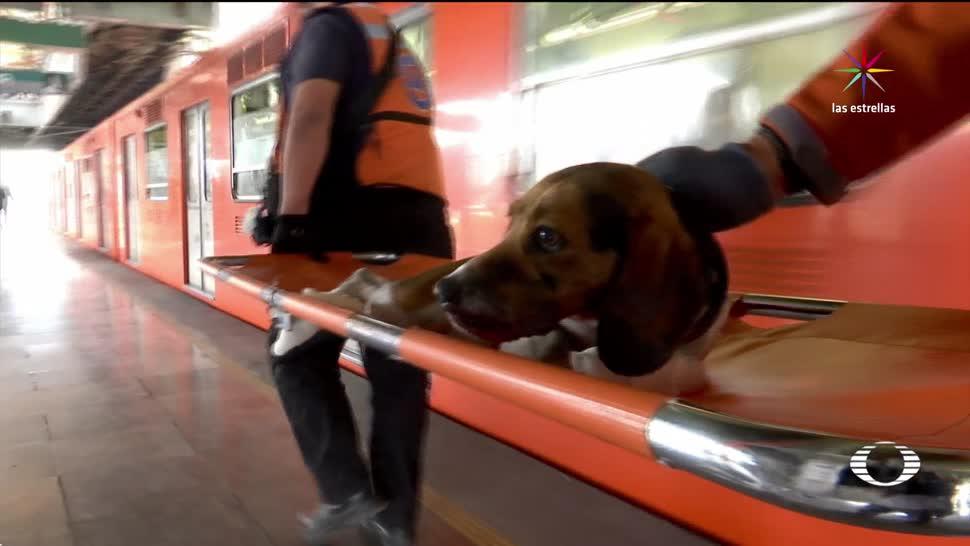 Refugio, perros, Metro, CDMX, perros callejeros, Transferencia Canina