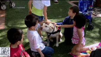 Especialistas Aseguran Raza perros No determina Agresividad Expertos