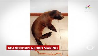 Denise Maerker Lobo Marino Caja Morelia