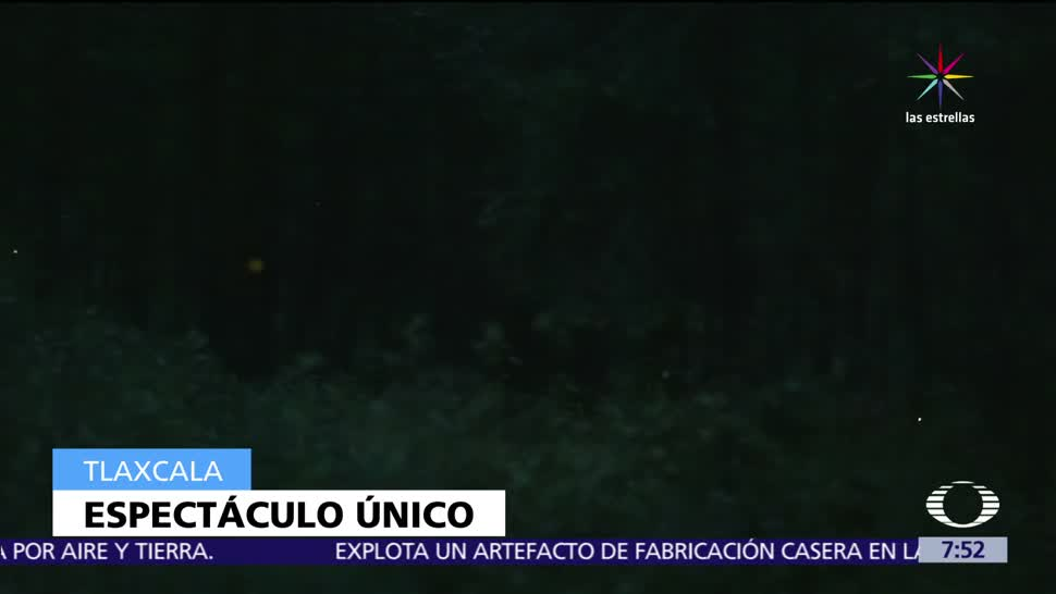 Luciérnagas, inundan, bosque, Nanacamilpa