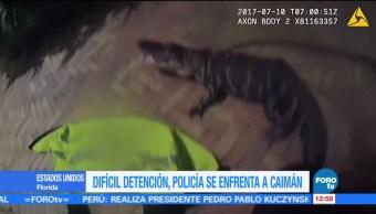Policía, Florida, atrapa, caimán