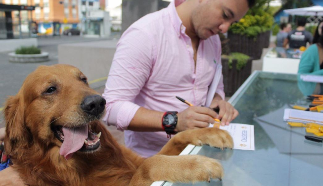Adopcion Mascotas Responsable Cdmx Benito Juarez