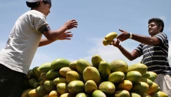 EU informa nuevos casos de salmonella por papaya mexicana