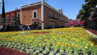 Puebla Tapete Flores Monumental Atlixco Turismo