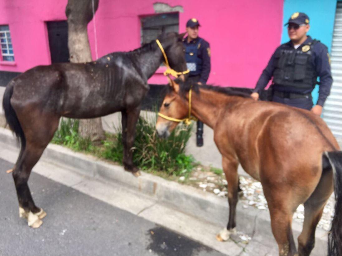Policías, sector Quiroga, caballos, cabalgaban, Vigilancia Animal