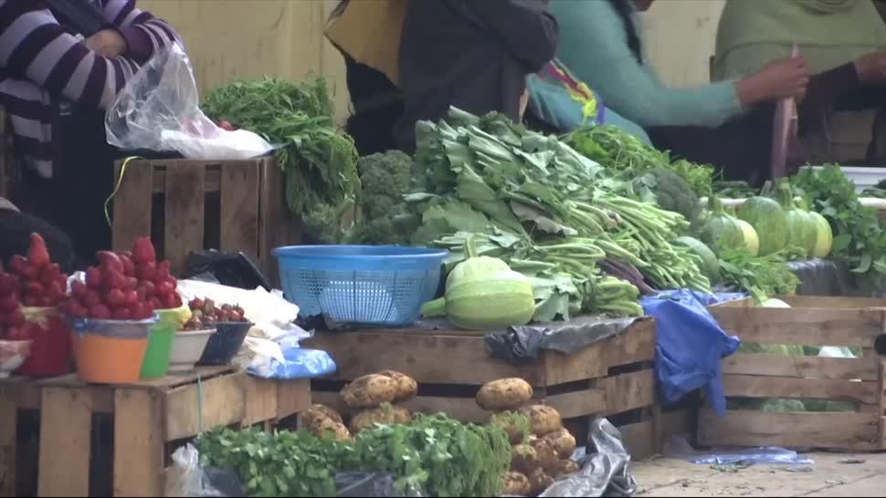 Chiapas, emite, recomendaciones, consumo, hongos, silvestres