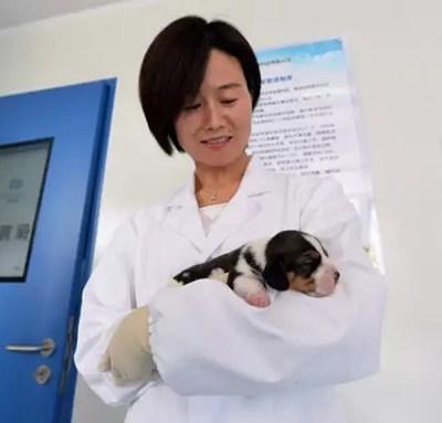 Científicos chinos crían primer perro del mundo clonado con edición genética