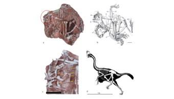 Imagen de una nueva especie de dinosaurio