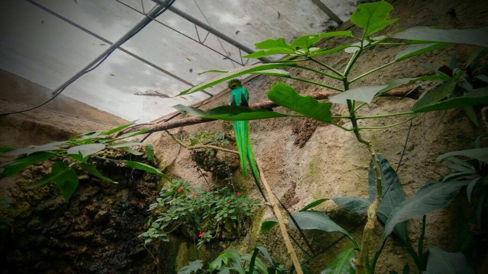 Quetzal Zoologico Tuxtla Chiapas Medio Ambiente