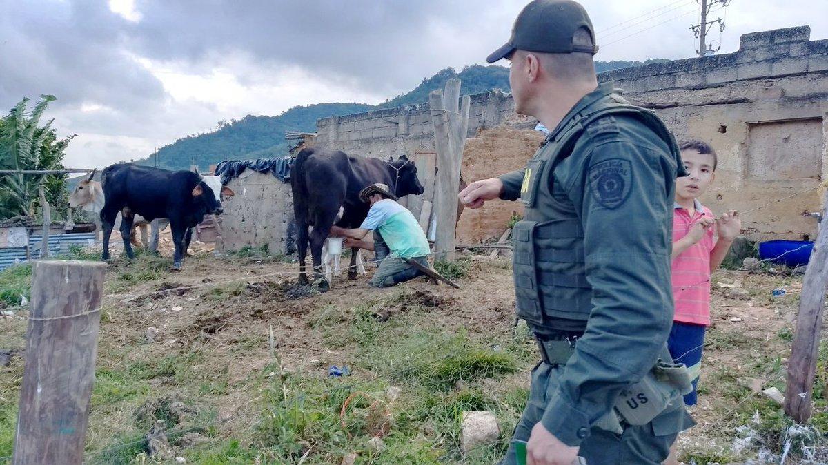 Por brotes de fiebre aftosa, México suspendió exportaciones de lácteos de Colombia