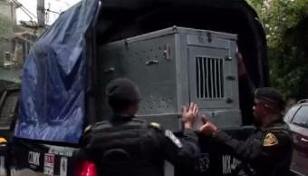 Policías acuden a la colonia San Pablo Tepetlapa, de la delegación Coyoacán, tras el ataque de un perro pitbull contra una niña de 3 años (Noticieros Televisa/Archivo)