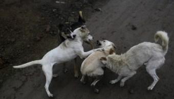 perros, mujer, jauría, cadáver, restos, devorados