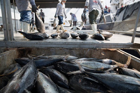 Inicia veda temporal pesca atún Colima